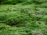 El bosque de Lilliput (musgo)